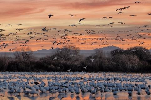 dawn-flight-by-john-fowler.jpg