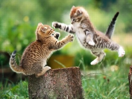 catfight. By Dennis Carr
