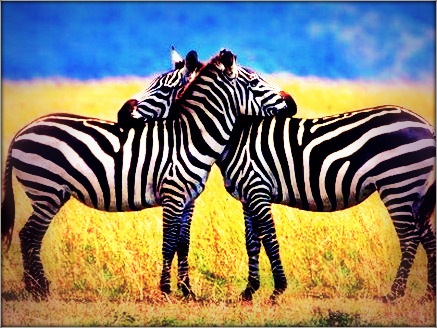 Hugging Zebras. By Nicole Doherty